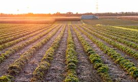Image of a beautiful sunset with fields and landscape royalty free stock image