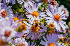 Image of beautiful violet flower and bee Stock Photo