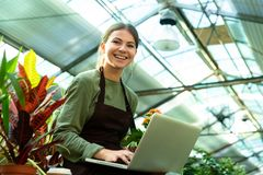 Image of beautiful woman wearing apron holding plant and using laptop while working in greenhouse. Image of beautiful woman gardener 20s wearing apron holding royalty free stock photography