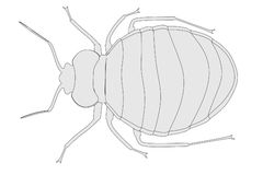 Image of bed bug Royalty Free Stock Photo