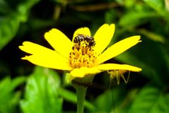 Bee is working time in the morning royalty free stock photo