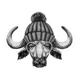 Image of bison, bull, buffalo for tattoo, logo, emblem, badge design. Vintage engraving style Stock Photo