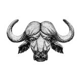 Image of bison, bull, buffalo for tattoo, logo, emblem, badge design Vintage engraving style Royalty Free Stock Photography