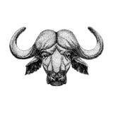 Image of bison, bull, buffalo for tattoo, logo, emblem, badge design Vintage engraving style. Image of bison, bull, buffalo for tattoo, logo, emblem, badge Royalty Free Stock Photography