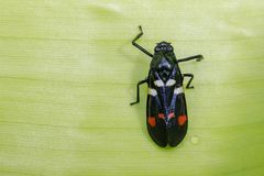 Image of black beetle on green leaves. Insect. Animal.  Stock Photos