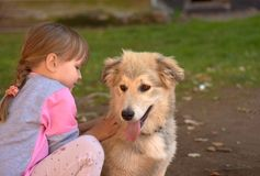 Image of little girl touching white puppy dog laying on park ground stock photography