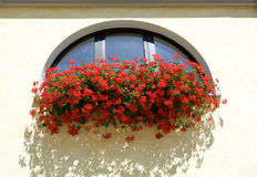 Image blooming flowers on the windowsill at home. Summer flowers in a pot on the windowsill outside on bright day stock photos