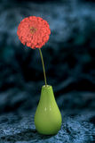 Image on blue background zinnia flower garden in a vase Royalty Free Stock Photo