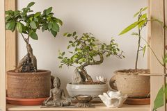 Bonsai corner with Asian decorative objects Royalty Free Stock Images