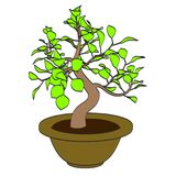 Image of bonsai tree Royalty Free Stock Image
