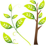 Image of Branch / Leaves Royalty Free Stock Photos