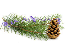 The image of a branch of the pine Royalty Free Stock Image