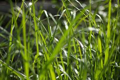 Beautiful green grass for background stock photography