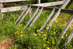 Image of broken wooden fence in field of flowers. image is faded style filtered Stock Images