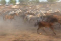 Image brouillée des chevaux d'un troupeau dans le mouvement Photo stock