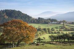 Image brumeuse de paysage de beau lever de soleil d'Autumn Fall au-dessus de pays Photographie stock libre de droits
