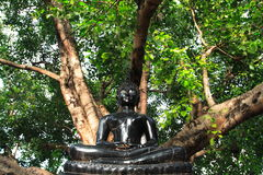 Image of the Buddha. Under the big tree Royalty Free Stock Image