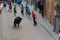 Image of a bull on the street Stock Images