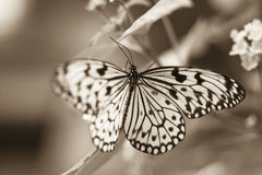 Image of a butterfly Royalty Free Stock Images