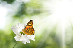 Image of butterfly on a flower in the garden close-up Stock Photo