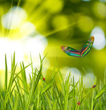Image of a butterfly in the garden. Close-up Stock Image