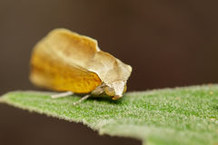 Image of butterfly Moth on green leaves. Insect. Animal Stock Photo