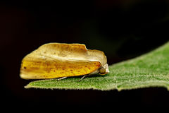 Image of butterfly Moth on green leaves. Insect. Image of butterfly Moth on green leaves. Insect Animal Royalty Free Stock Photography