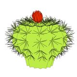 Image of cactus flower Stock Images