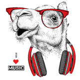 The image of the camel in the glasses, headphones and in hip-hop hat. Vector illustration. Royalty Free Stock Image