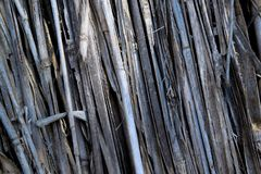 Natural texture formed by a number of twigs, bright gray Stock Photography