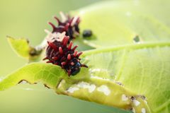 Image of a caterpillar bug on green leaves. Insect. Animal.  stock photo