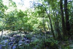 Image of chaotic mix of very green vegetation and rocks covering. The channel of the mountain river called `Chelo` typical vegetation Atlantic very green and stock images