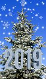 Image of Christmas tree closeup stock photography