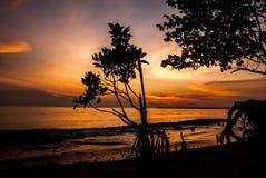 Image classique de silhouette de couleur de ton d'humeur d'arbre de palétuvier sur la plage avec le coucher du soleil renversant Photos stock