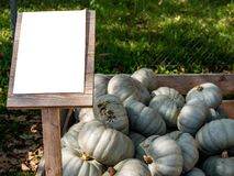 Image of close up view on crown-prince pumpkins royalty free stock photos