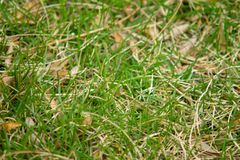 Image of Closeup of Grass. In a field during warm spring day royalty free stock images