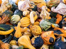 Image of clouse up on many little pumpkins royalty free stock photo