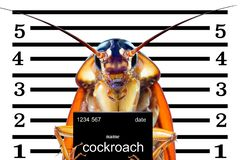 Image of cockroaches arrested.The charges against ,Mr cockroaches, royalty free stock photo