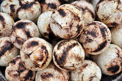 Coconut. A image of coconut background Stock Image