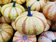 Colorful Pumpkins, Farmer`s Market, Orange & White royalty free stock images