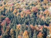 Image of colorful autumn trees in a mixed forest royalty free stock photos