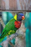 An image of a colorful parrot Royalty Free Stock Photos