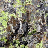 Image of colorful texture. Image of colorful roughness gritty texture Stock Photos