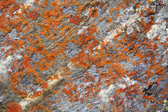 Image of colorful texture Stock Photography
