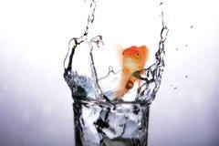 Image composée de bouche ouverte du poisson rouge tout en nageant 3D Images stock