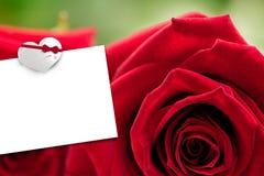 Image composée de deux roses rouges Photo libre de droits