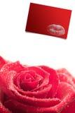 Image composée de rose de rose sur le fond blanc Images libres de droits