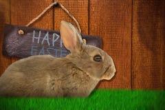Image composée de vue de côté de lapin brun mignon photographie stock libre de droits