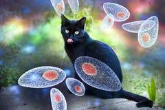 Image conceptuelle de conscience de gondii de toxoplasme Photo libre de droits