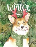Watercolor artistic Christmas dog portrait on spruce background. Cute pet animal hand drawn. Animal concept. Watercolor. Image of a corgie dog with Winter Royalty Free Stock Photos